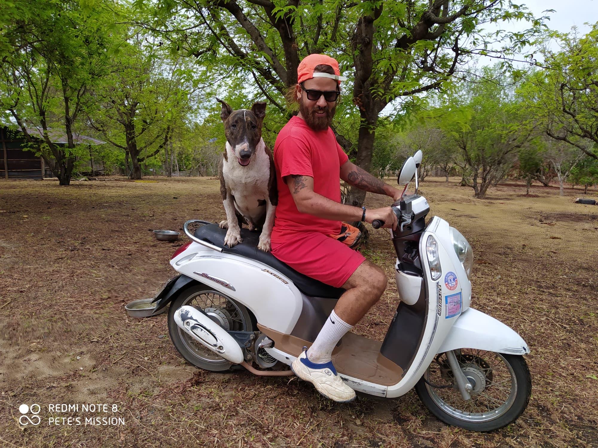 The Biker Dog